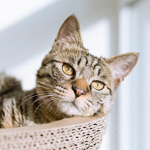 Katze Pictibe